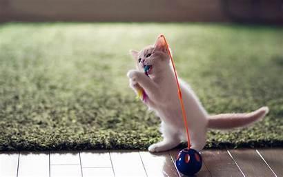 Kitten Funny Fun Animals Wallpapers Desktop Toy