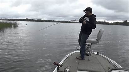 Pike Fishing Northern Weeds Vegetation Emergent