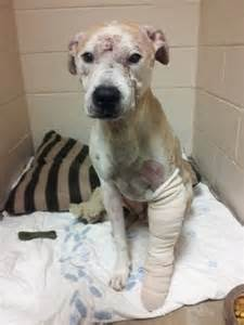 waugh chapel animal hospital animal cruelty investigation in linthicum eye on annapolis