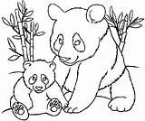 Coloring Pandas Pages Panda Children Colouring Kung Adult Fu Justcolor sketch template