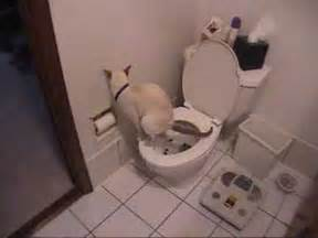 cats using the toilet cat using toilet toilet paper