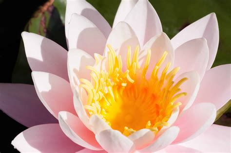 picture flower pistil macro daylight exotic