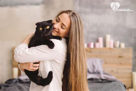 le  migliori razze  gatti da appartamento quale