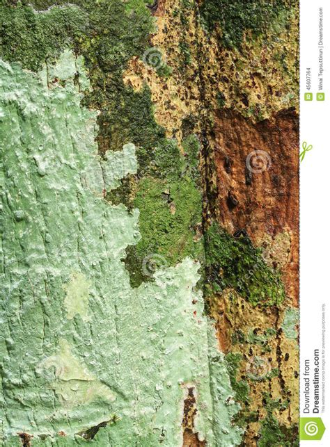 lichens sur le tronc d arbre photo stock image 45607764