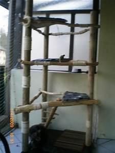 Katzenkratzbaum Selber Machen : selbstbau kratzbaum aus naturholz st mmen katzen forum ~ Yasmunasinghe.com Haus und Dekorationen