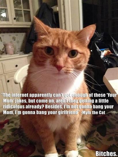 Mom Suck Cat Jokes Meme Mylo Sucking