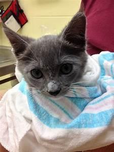 pet pal animal shelter saint petersburg