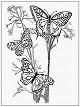 Butterfly Coloring Pages Adult Butterflies Printable Malvorlagen Adults Erwachsenen Kostenlose Realistic Monarch Ausmalen Difficult Ausmalbilder Libellen Blumen Tiere Fuer Animals sketch template
