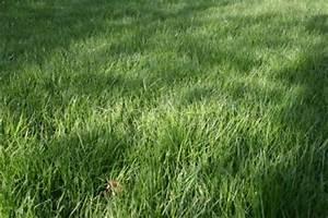 Rasenpflege Nach Dem Winter : rasensch den nach dem winter werden jetzt sichtbar ~ Orissabook.com Haus und Dekorationen