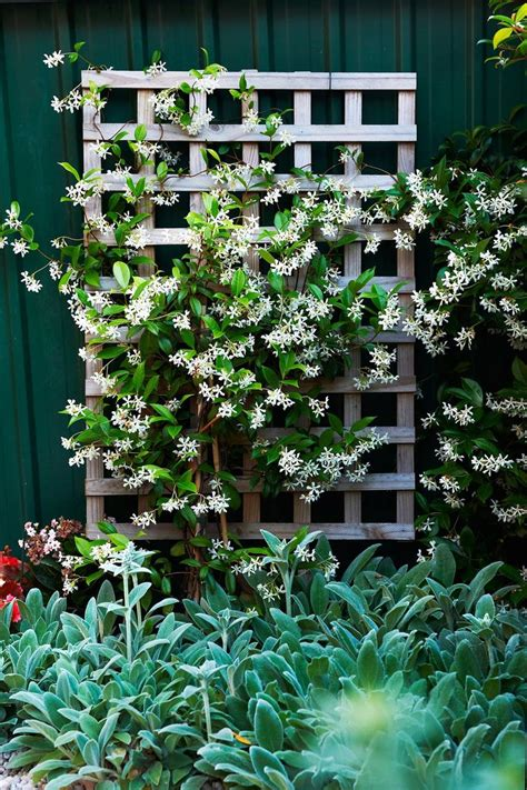 17 Best Images About Pergola Pictures, Arbors, And Trellis