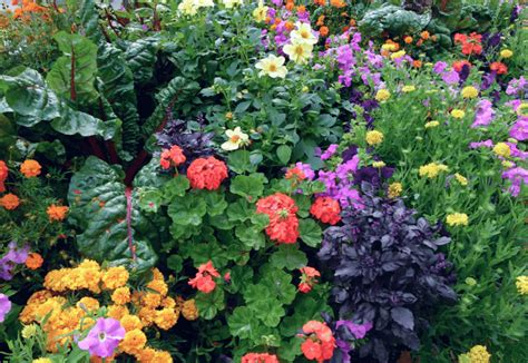 Things To Know When Planting Vegetables And Flowers
