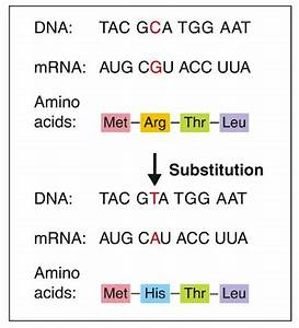 The gallery for --> Substitution Mutation Diagram