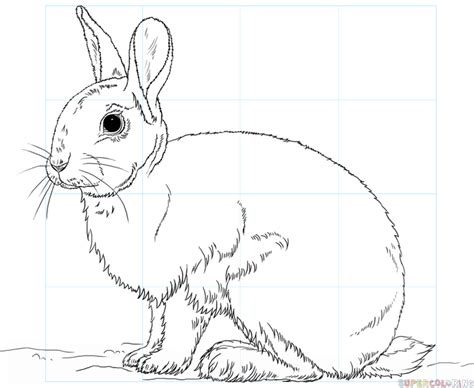draw  rabbit step  step drawing tutorials