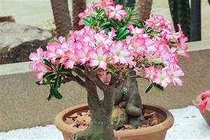 Tropische Pflanzen Kaufen : w stenrose pflanzen optimale bedingungen f r die exotische pflanze im berblick ~ Watch28wear.com Haus und Dekorationen