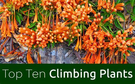 Best 10 Climbing Plants  David Domoney