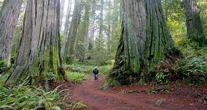 Redwood Forest Wallpapers (64+ background pictures)