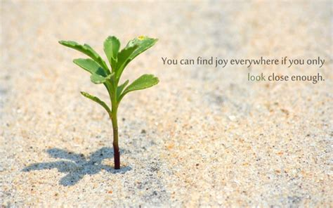 quotes  growing plants quotesgram