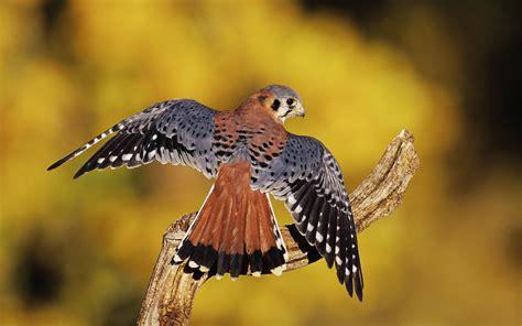 Birds Of Prey Amazing Wallpapers