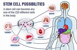 New applications of stem cell therapy | Nigeria Today