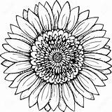 Sunflower Drawing Outline Simple Clipart Line Flower Drawings Coloring Vector Illustration Pages Tattoo Mandala Realistic Silhouette Pencil Sketch Plant Clip sketch template