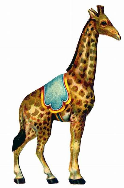 Circus Giraffe Animals Graphic Graphics Clip Clipart