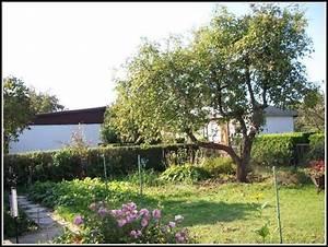 Garten Berlin Kaufen : berlin kleingarten kaufen garten house und dekor galerie jvwbgrk1jz ~ Watch28wear.com Haus und Dekorationen