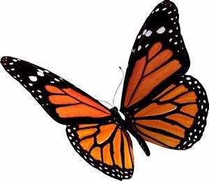 Butterfly PNG Transparent Butterfly.PNG Images. | PlusPNG