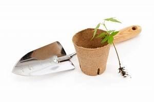 Ahorn Vermehren Steckling : roter ahorn pflanzen ein ratgeber von a bis z ~ Lizthompson.info Haus und Dekorationen