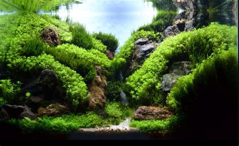 Mountain Aquascape by Mountain Aquascaping Tank Ideas Aquascape Paludarium