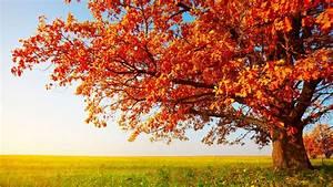 fall, sky, nature, tree, leaves, blue, orange, calm, green ...