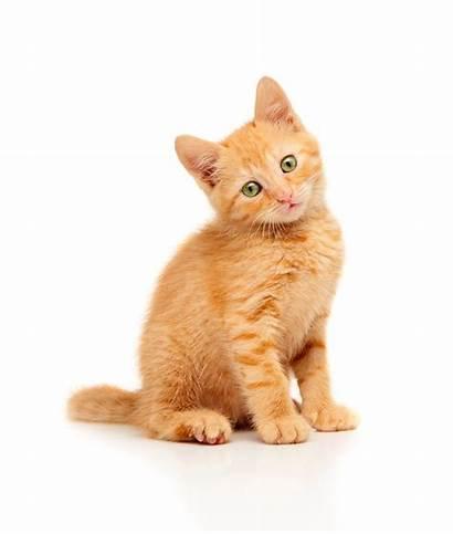 Cat Kitten Gatos Gattino Mascotas Rosso Cats
