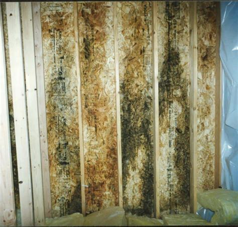 Cleaning Mold from Subfloor and Carpet  Mold Killer Products
