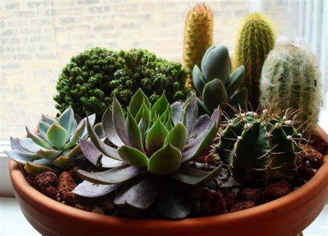 cactus and succulent container gardens succulent container gardens ideas backyard ideas pinterest