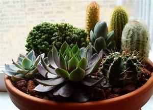 Pot A Cactus : succulent container gardens ideas backyard ideas pinterest ~ Farleysfitness.com Idées de Décoration