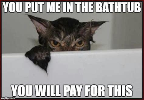 Angry Wet Cat Wants Revenge
