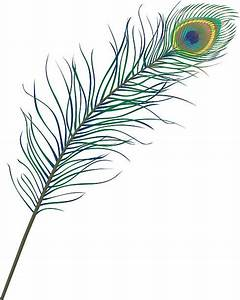 Royalty Free Peacock Feather Clip Art, Vector Images ...