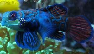 Fische Für Anfänger : fische f rs aquarium bilder zuhause image idee ~ Orissabook.com Haus und Dekorationen