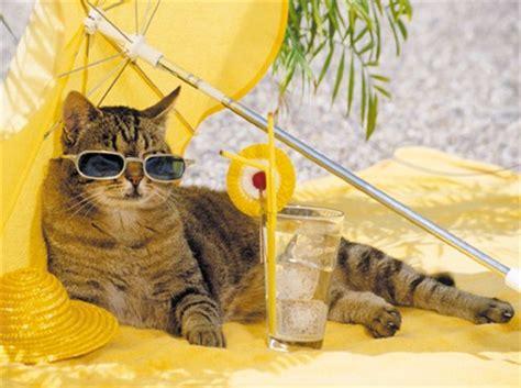 sunscreen  cats    human sunscreen  cats