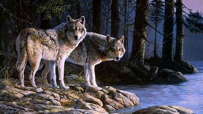 Wolf Wolves 1080 1920 River Digital Wallpapers