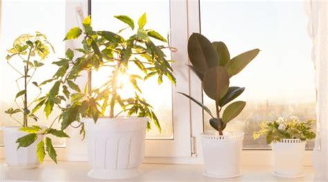 Grünpflanzen Im Kinderzimmer