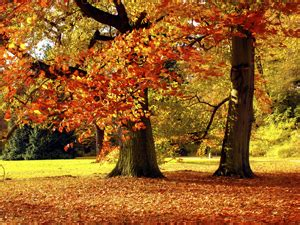 Best Places For Fall Colors In Chicago « Cbs Chicago