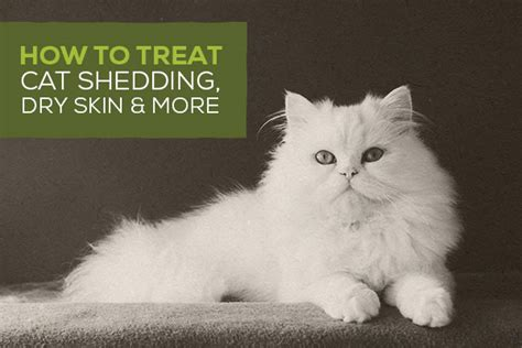 how to stop shedding cat shedding season how to reduce cat shedding stop