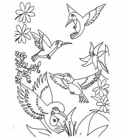 Coloring Bird Birds Toddler Hummingbird Adults Humming