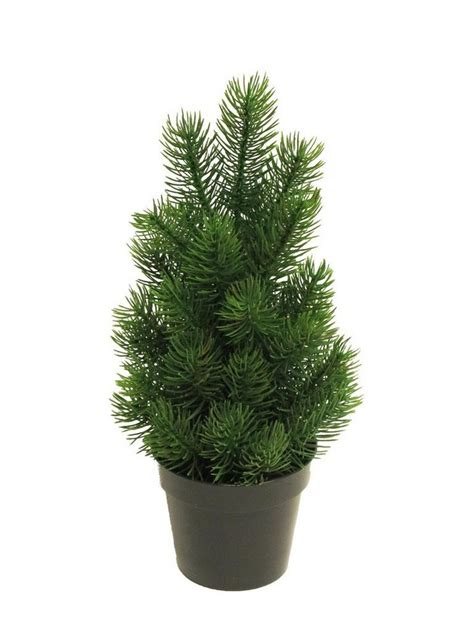 tannenbaum im topf kaufen edel tannenbaum quot rory im topf quot 32 cm hoch kaufen otto