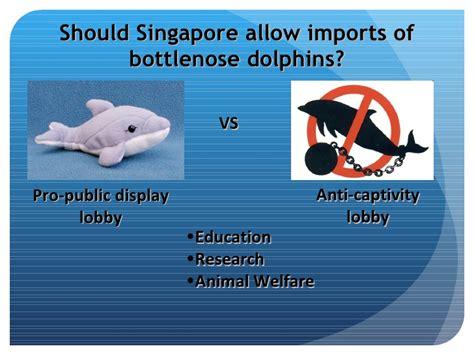 dolphins  captivity