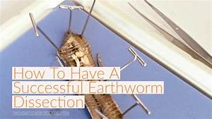 How To Have A Successful Earthworm Dissection