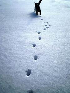 13 Best Images About Maine Animal Tracks On Pinterest