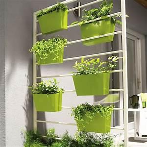 Plantes Grimpantes Pot Pour Terrasse : c 39 est le printemps quelles plantes pour ma terrasse ~ Premium-room.com Idées de Décoration