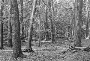 Forest Drawing II by Christopher Witchall | Buy Affordable ...