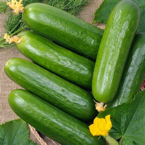 Cucumber Seeds by Cucumber Seeds Quot Marketer Quot